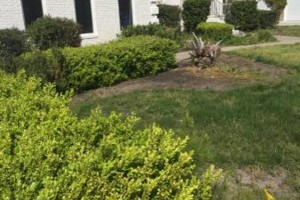 Photo #7: Weed control/ Landscaping
