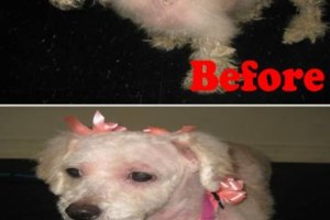 Photo #1: Toni's Glamour Pets Dog Grooming