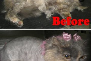 Photo #5: Toni's Glamour Pets Dog Grooming