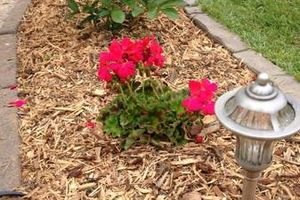 Photo #2: TideWater Lawn service & Landscaping