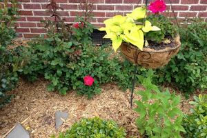 Photo #3: TideWater Lawn service & Landscaping