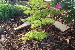 Photo #4: TideWater Lawn service & Landscaping