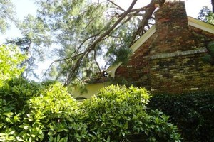 Photo #4: Rocky Top Tree Service/ Storm cleanup