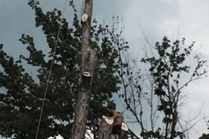 Photo #3: Rocky Top Tree Service/ Storm cleanup