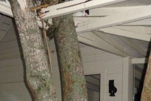 Photo #2: Rocky Top Tree Service/ Storm cleanup