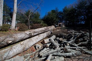 Photo #1: Rocky Top Tree Service/ Storm cleanup