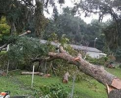 Photo #2: POST STORM PROPERTY CLEAN UP