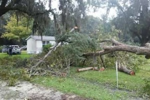 Photo #1: POST STORM PROPERTY CLEAN UP