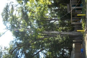 Photo #11: Ben's Tree Service