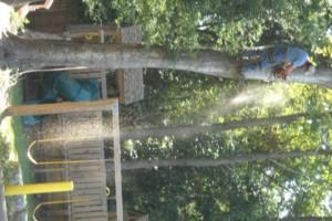 Photo #10: Ben's Tree Service