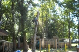 Photo #9: Ben's Tree Service