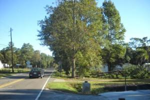 Photo #8: Ben's Tree Service