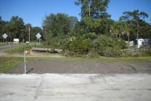 Photo #7: Ben's Tree Service