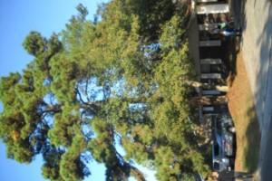 Photo #6: Ben's Tree Service