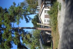 Photo #5: Ben's Tree Service