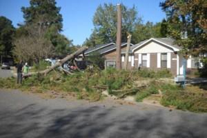 Photo #4: Ben's Tree Service