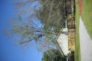 Photo #3: Ben's Tree Service