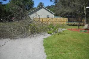 Photo #2: Ben's Tree Service