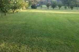 Photo #1: $30 Lawn Care
