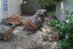 Photo #3: Bottom2Top Tree Service
