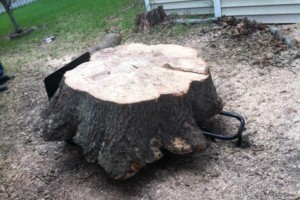 Photo #2: Bottom2Top Tree Service
