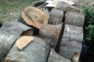 Photo #1: Bottom2Top Tree Service