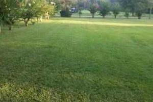 Photo #1: Lawn Care $30