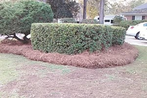 Photo #4: Morales Landscaping