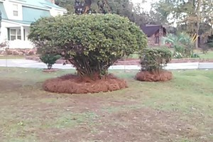 Photo #2: Morales Landscaping