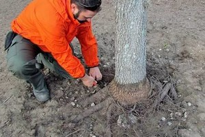 Photo #3: Certified Arborist Nathan Dubosh