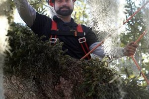Photo #1: Certified Arborist Nathan Dubosh