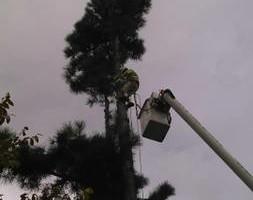 Photo #4: JED Enterprises (TREE SERVICE)