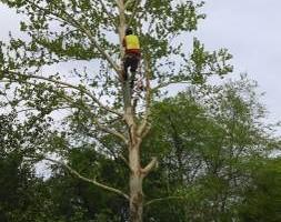 Photo #2: JED Enterprises (TREE SERVICE)