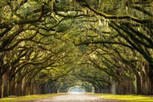 Photo #6: ARBORIST TREE PROFESSIONALS