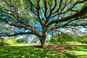 Photo #5: ARBORIST TREE PROFESSIONALS