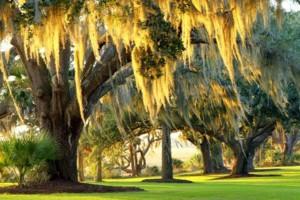 Photo #4: ARBORIST TREE PROFESSIONALS