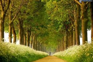Photo #1: ARBORIST TREE PROFESSIONALS