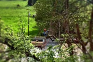 Photo #1: Arborist/Tree work for trade