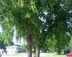 Photo #9: JASON'S TREE SERVICE LLC
