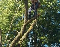 Photo #7: JASON'S TREE SERVICE LLC