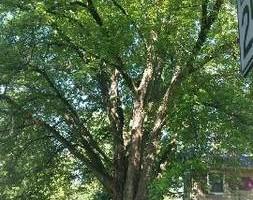 Photo #6: JASON'S TREE SERVICE LLC
