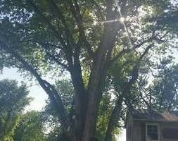 Photo #5: JASON'S TREE SERVICE LLC