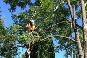 Photo #3: Tree Trimming & Removal