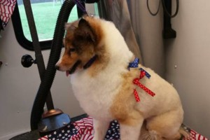 Photo #6: THE HOUSE THAT RUTH BUILT MOBILE PET GROOMERS