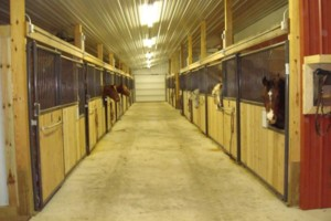 Photo #8: Horse Boarding Available at Still Water Arena