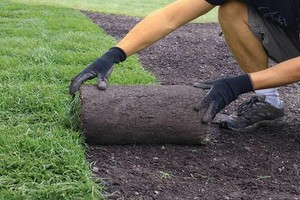Photo #5: Landscaping and Lawn care.
