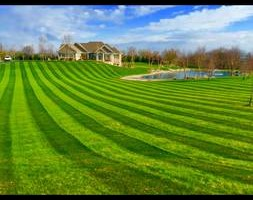 Photo #1: Mitchel Lawn care service
