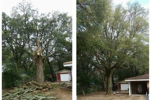 Photo #1: Kens Yard and tree maintenance. Tree trimming