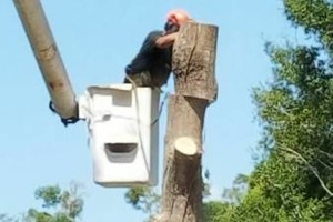 Photo #1: CARLOS TREE SERVICE
