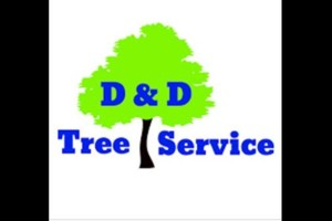 Photo #1: D&D Tree Service and Removal